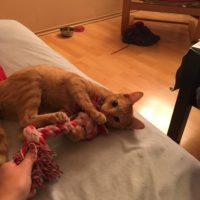 O.J. – zrzavé koťátko