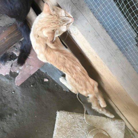 Kočičí Peklo na zemi