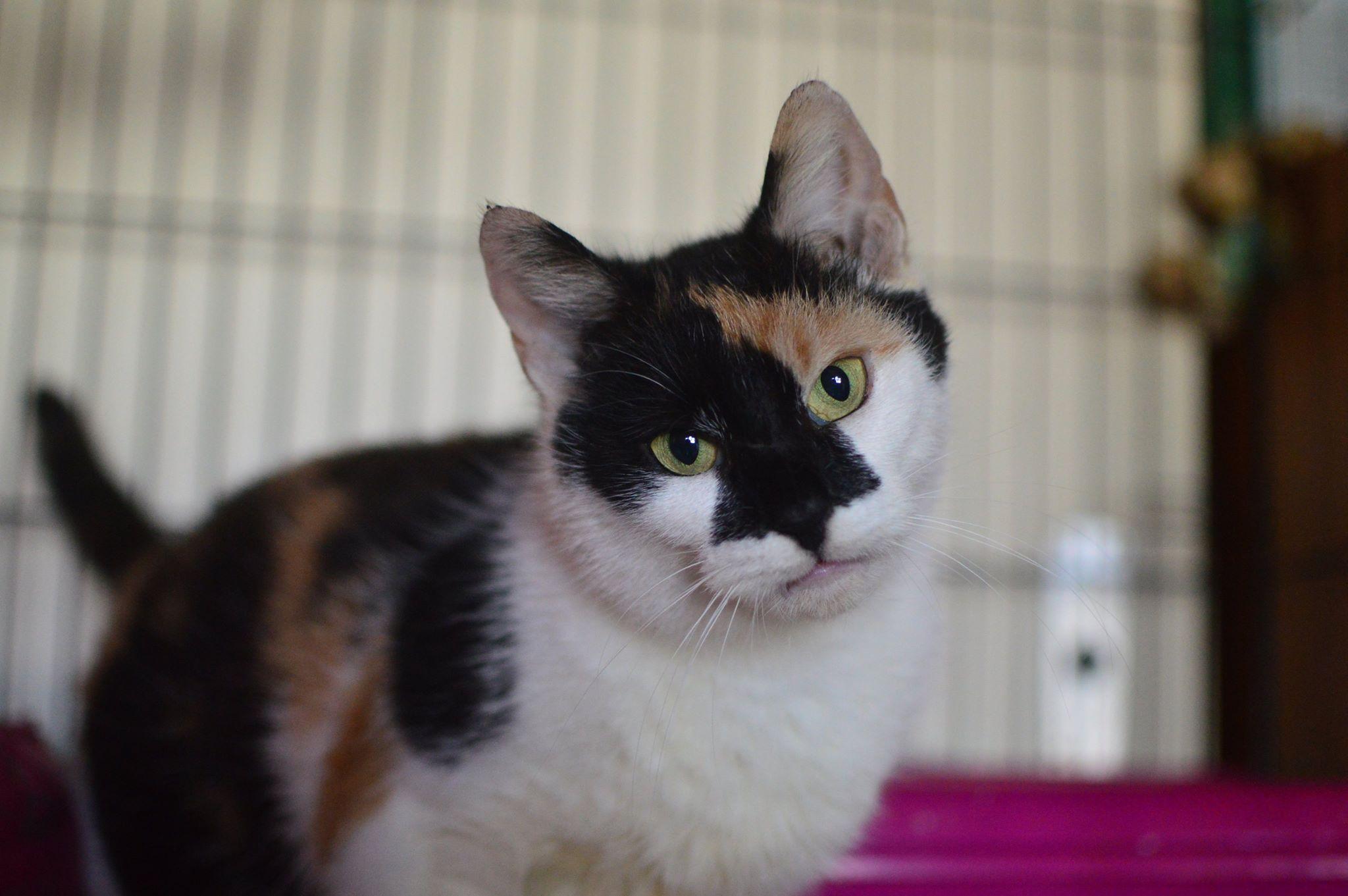 Kočka Oliva