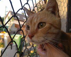 Peklo kočky 3