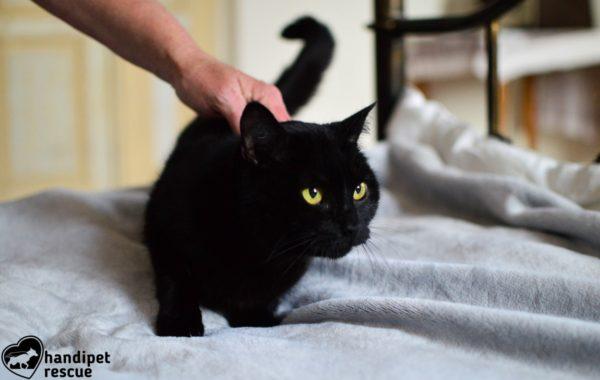 Kočičí peklo 2_1
