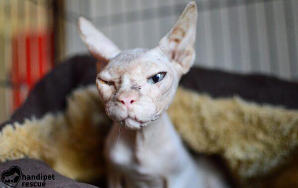 Kočičí peklo 2_4