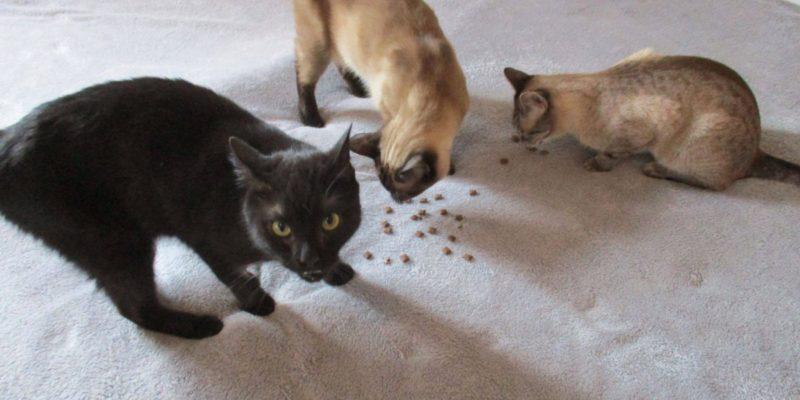 Kočky_Ministrová_2