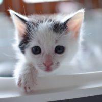 Peanut – nalezené koťátko
