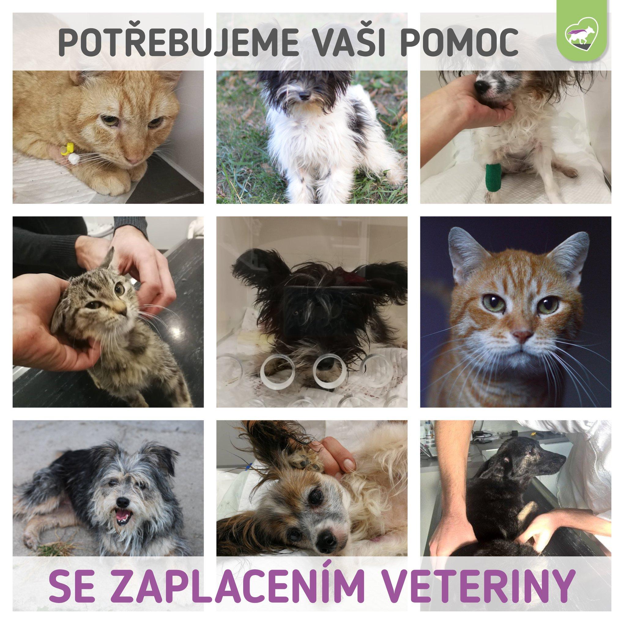 Potřebujeme vaši pomoc se zaplacením veteriny