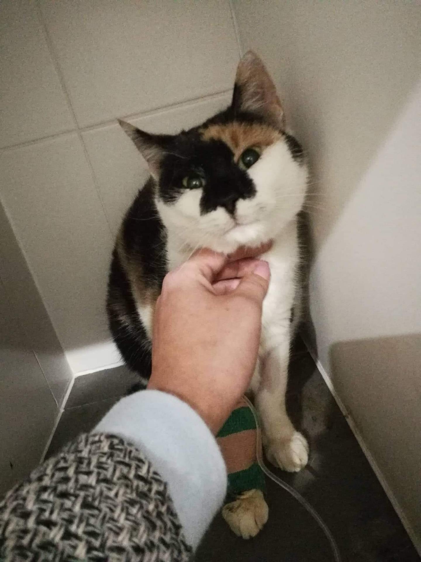 Oliva je stále hospitalizovaná