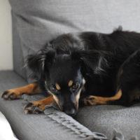 Lola – nesmělá kráska