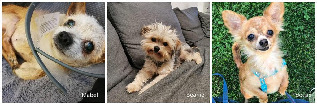 Mabel, Beanie, Tootsie