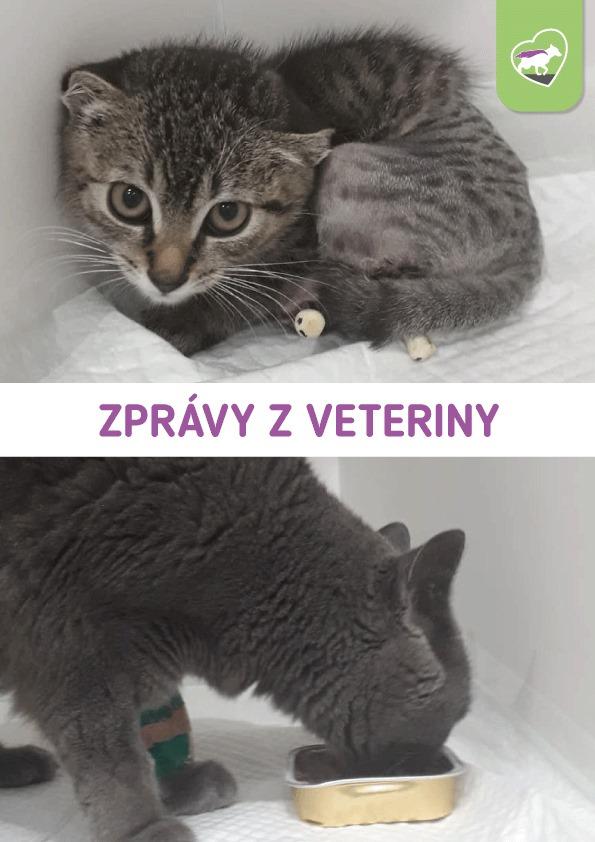 Zprávy z veteriny