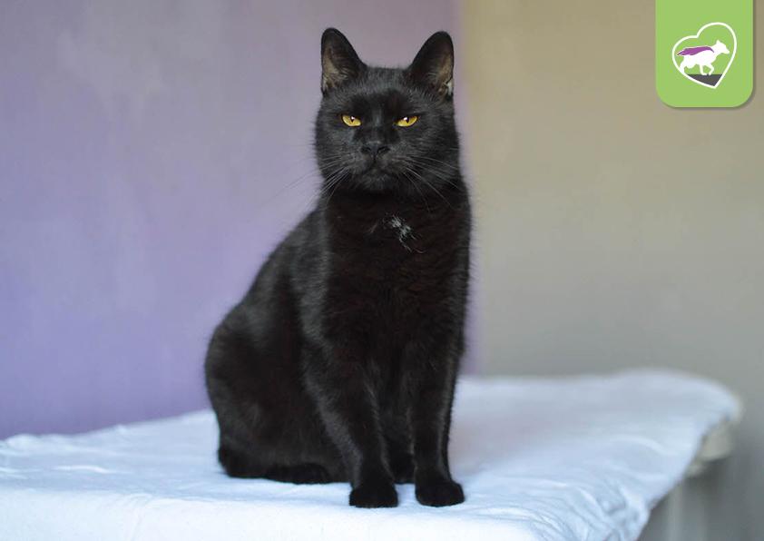 najít černou kočičku