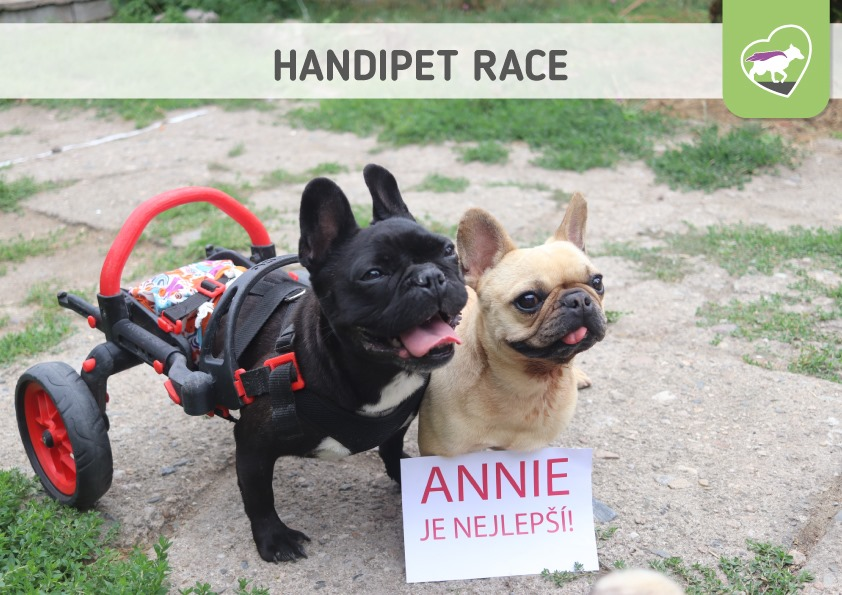 Handipet Race