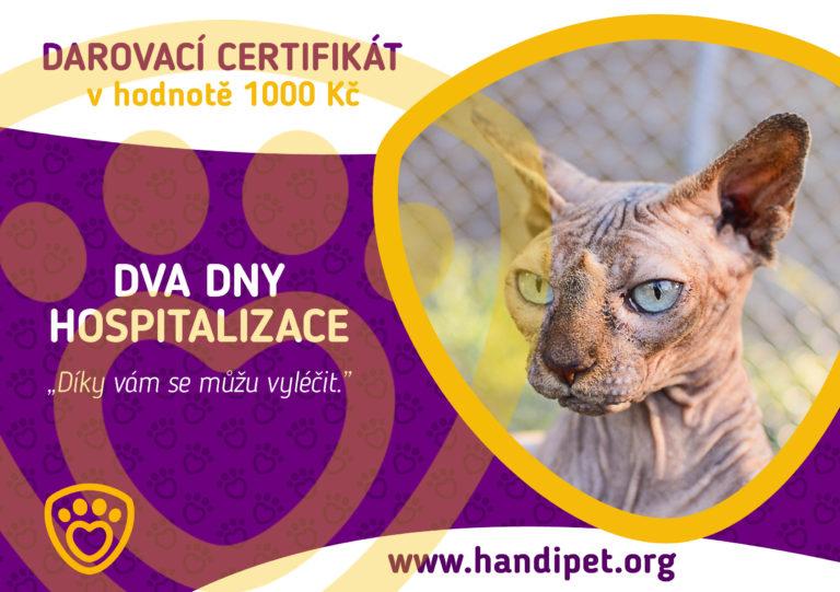 Darovací certifikát: dva dny hospitalizace pro kočičku za 1000 Kč