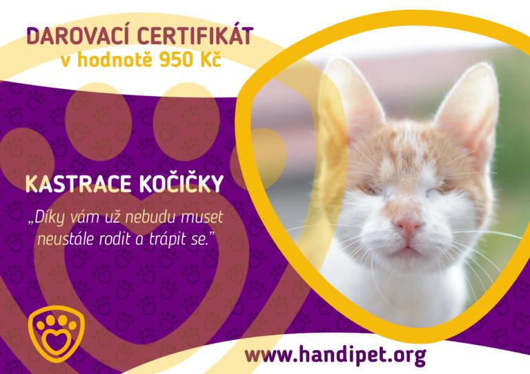 Darovací certifikát: kastrace kočičky za 950 Kč