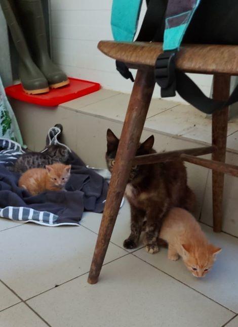 Koťátka s maminkou
