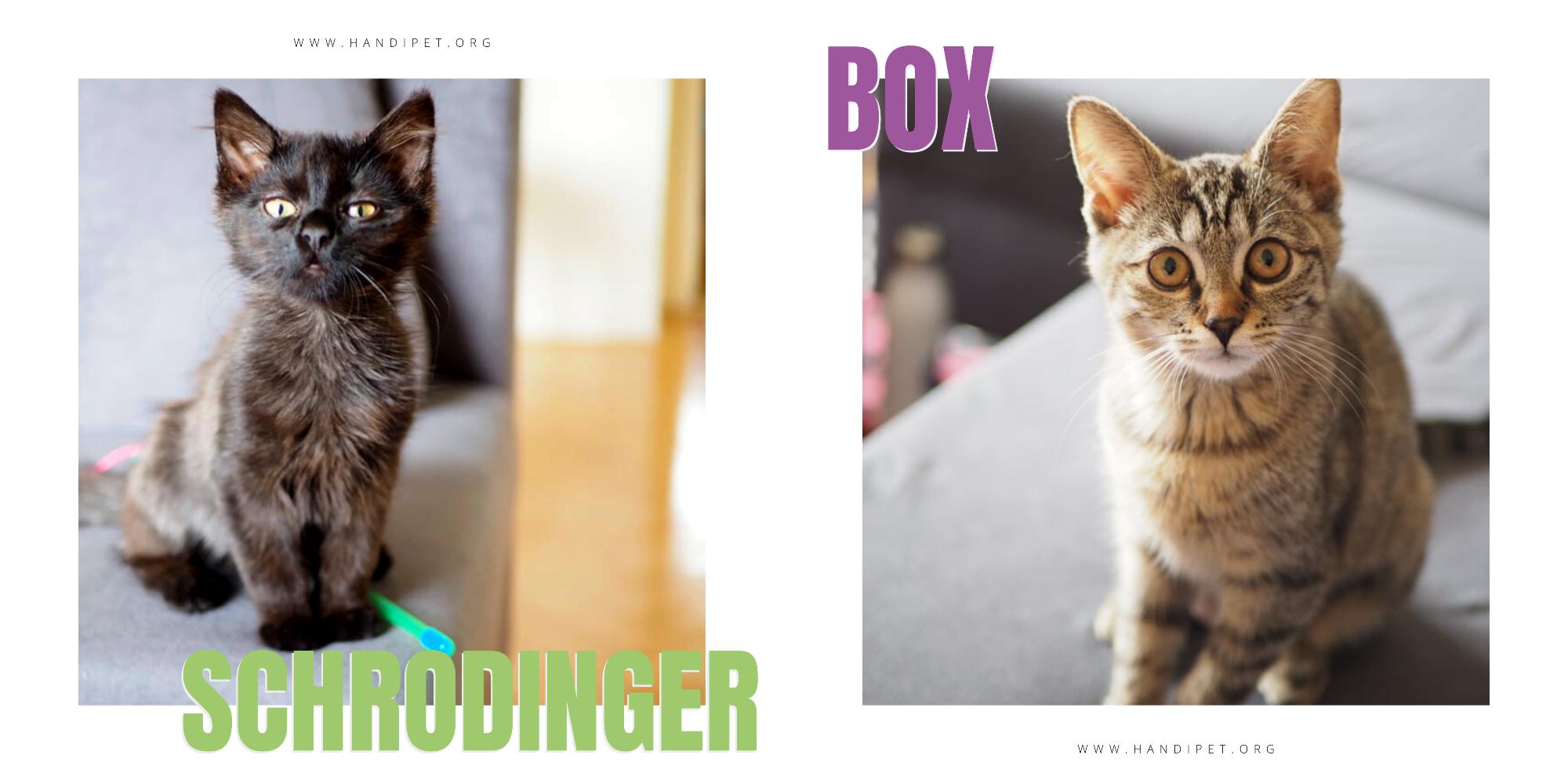 Schrodinger a Box